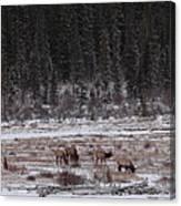 Elk Landscape Canvas Print