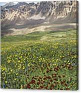 Elk Mountain Wildflowers Canvas Print