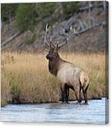 Elk On The Madison Canvas Print