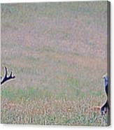 Elk On The Plains 1 Canvas Print