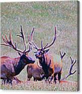 Elk On The Plains 2 Canvas Print
