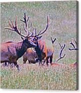Elk On The Plains 3 Canvas Print