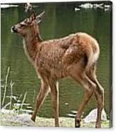 Elk Pictures 74 Canvas Print