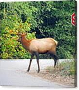 Elk Right Of Way Canvas Print