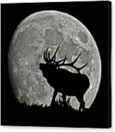Elk Silhouette On Moon Canvas Print