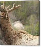 Elk Sky Gaze Canvas Print