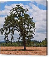 Elm Tree In Hay Field Art Prints Canvas Print