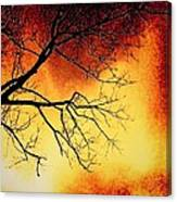 Ember Bough Canvas Print
