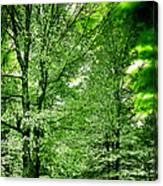 Emerald Clearing Canvas Print