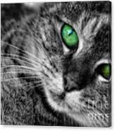 Emerald Eyes Cat  Canvas Print