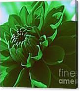Emerald Green Beauty Canvas Print