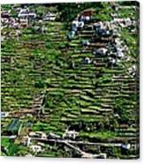 Emerald Madeira Terraces Canvas Print