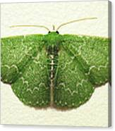 Emerald Moth Canvas Print