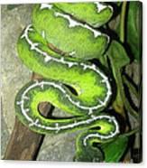 Emerald Tree Boa Canvas Print
