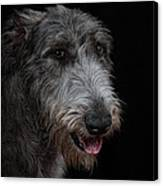 Irish Wolfhound II Canvas Print