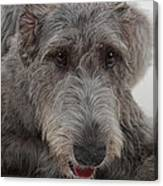 Irish Wolfhound IIi Canvas Print