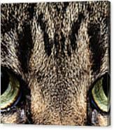 Emmy Eyes Canvas Print