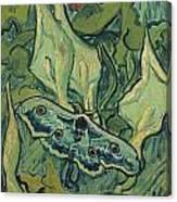 Emperor Moth Canvas Print