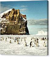 Emperor Penguin Colony Cape Washington Antarctica Canvas Print
