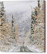 Empty Road Passing Through A Forest Canvas Print