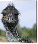 Emu Gaze Canvas Print