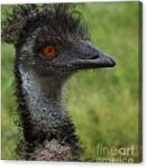 Emu With Red Eye Canvas Print