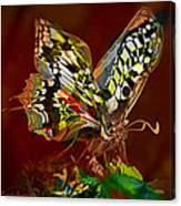 Enchanted Butterfly. First.  Canvas Print