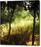 Enchanted Forest 1 Canvas Print