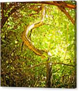 Enchanted Forest 4 Canvas Print