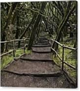 Enchanted Forest Garajonay National Park La Gomera Spain Canvas Print
