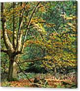 Enchanted Forest Tree Canvas Print