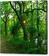 Enchanted Green Path Canvas Print
