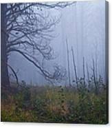 Enchanted Mist - Casper Mountain - Casper Wyoming Canvas Print