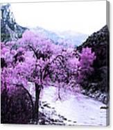 Enchanted Pink Canvas Print
