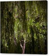 Enchanted Willow Canvas Print