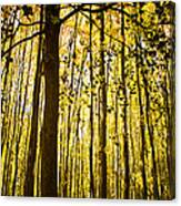 Enchanted Woods Canvas Print