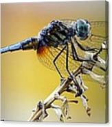 Enchanting Dragonfly Canvas Print
