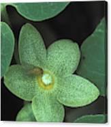 Endangered Flora Canvas Print