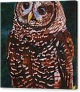 Endangered - Spotted Owl Canvas Print