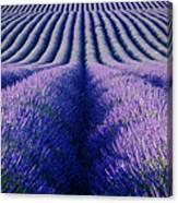 Endless Rows Canvas Print