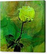 Enduring Yellow Rose Canvas Print