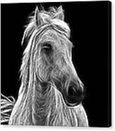 Energetic White Horse Canvas Print