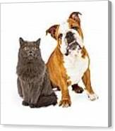 English Bulldog And Gray Cat Canvas Print