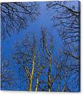 English Forest Trees Canvas Print