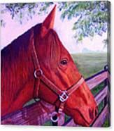English Horse Canvas Print