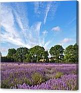 English Lavender Fields In Hampshire Canvas Print