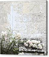 English Roses IIi Canvas Print