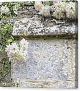 English Roses Vi Canvas Print