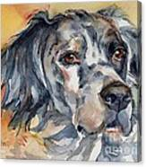 English Setter Portrait Canvas Print
