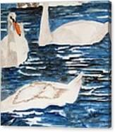 English Swan In The Queen's Garden Canvas Print